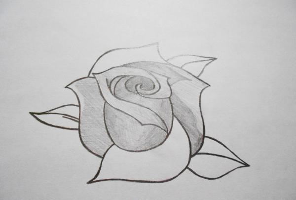 Draw a rose