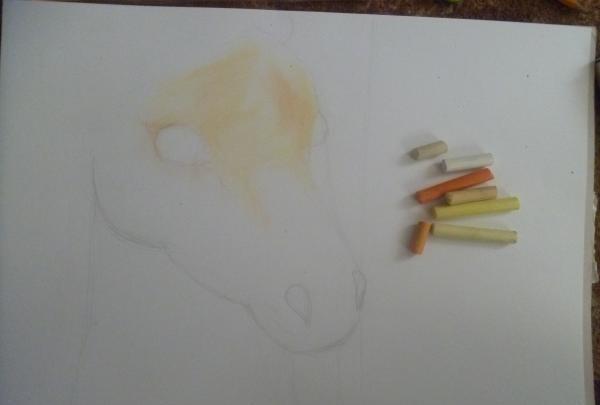 Chúng tôi vẽ một bức chân dung của một con ngựa muối