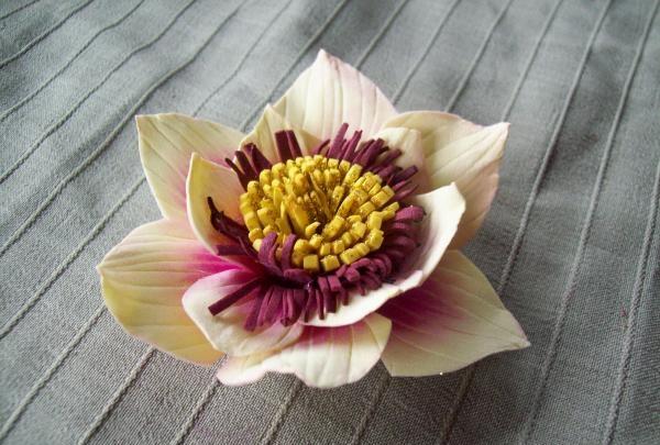 hái hoa
