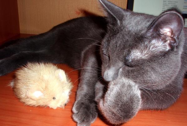 Rato de brinquedo de peles para gato