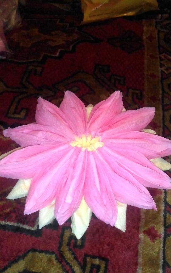 Serviet Lotus