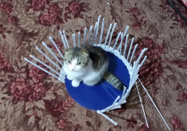 Casa de gato de jornal