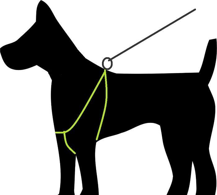 Arnês macio para o cão