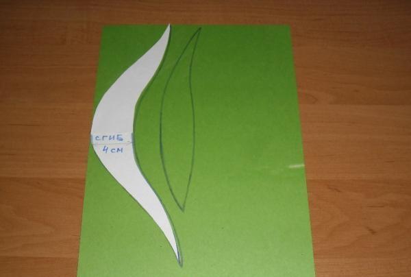 carton verde