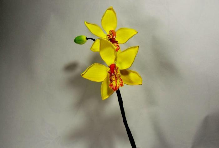 Warsztatowe gałązki orchidei