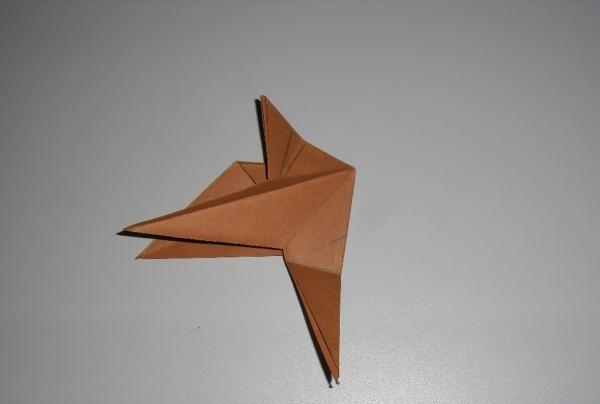 face o pasăre colibri