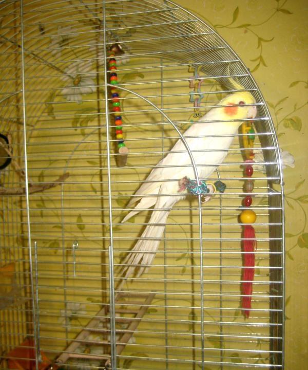 папагал на въже