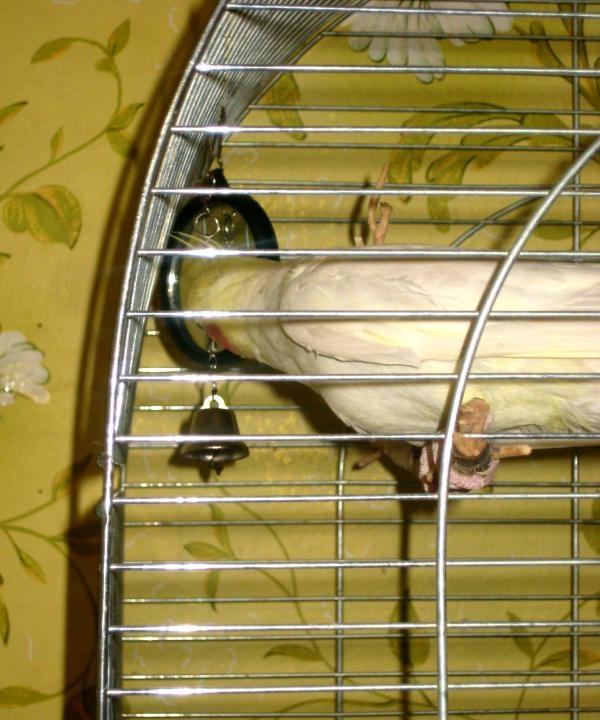 поглед папагал