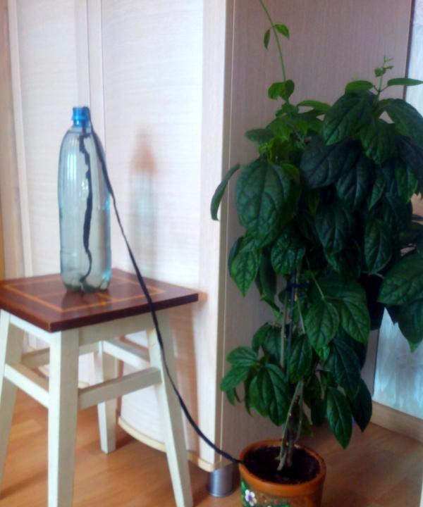 Udare automată flori acasă