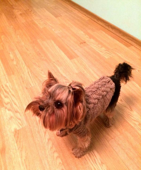 สุนัขในเสื้อกันหนาว