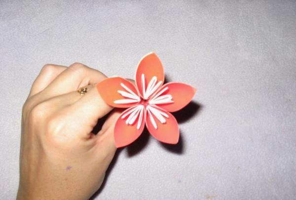 lipici floarea