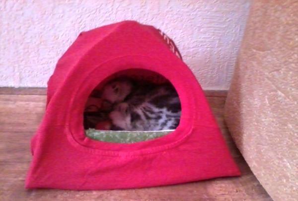 Loja cort pentru un animal de companie