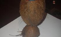 Suport de pixuri de cocos