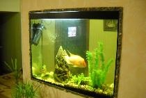 Akvariumas sienoje