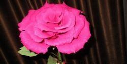 Розова гофрирана хартия