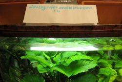 Corrigir iluminação do aquário