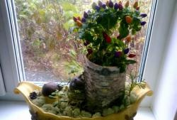 Ястия за стайни растения