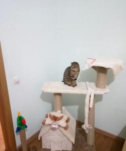 Cum să faci o casă pentru o pisică?