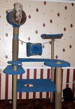 Complexo de jogos para gatos