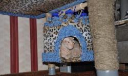 Къща за Коте