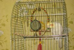 Играчки за папагал