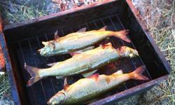 Przepisy: Wędzona ryba na gorąco