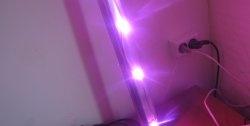 Phyto LED Downlight