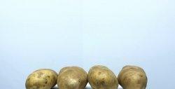 Obținerea amidonului de cartofi