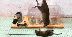 How to make an electric trap for mice and rats