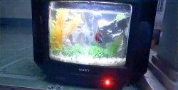 Cum să faci un acvariu de la un televizor vechi