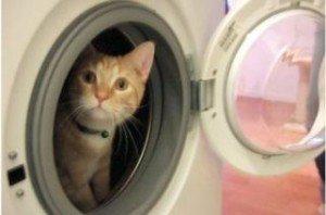 Котка в пералнята