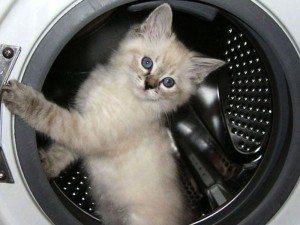 השרוול במכונת הכביסה נקרע - מה עלי לעשות?