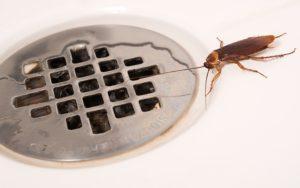 хлебарка в мивката